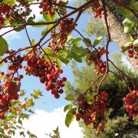 Земляничное дерево :: Гала