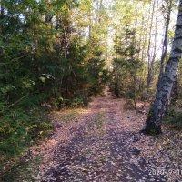 Вечерние прогулки по лесу... Осень... :: Алена