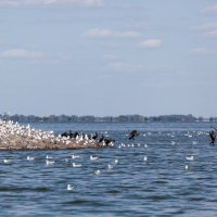 Птичий остров :: Андрей Lyz