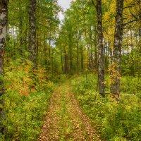 В осеннем лесу :: Дмитрий Иванов