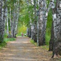 Прогулка по аллее... :: Maxxx©
