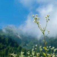 Прогулка в горах :: Таня Горбачева