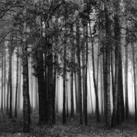Деревья в своих снах. :: Volodymyr Shapoval VIS t