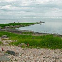 Озеро Ильмень :: El Кондукова