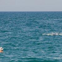 Дельфин! :: Давид Манакьян