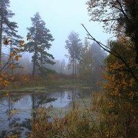 Легкой дымкой осенний туман затушует за речкой пейзажи. :: Volodymyr Shapoval VIS t