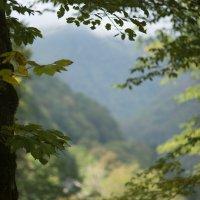 утро в осеннем лесу :: Дима Валерич