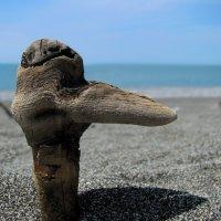 Из жизни страусов. :: игорь кио