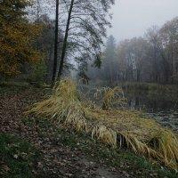 Опавшие листья под ногами, :: Volodymyr Shapoval VIS t