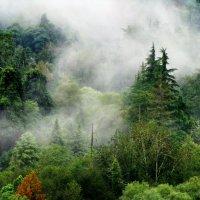 Утро в горах. :: игорь кио