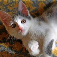 котенок через месяц :: tamara kremleva
