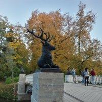 Золотая осень :: Сапсан