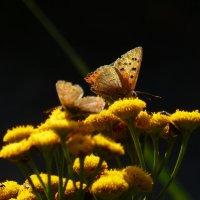 бабочки бабьего лета 14 :: Александр Прокудин