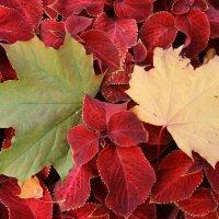 осенние листья) :: Тарас Золотько