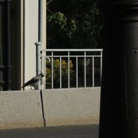 ворона на мосту :: sv.kaschuk