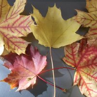 """""""Осень,осень,ну давай у листьев спросим..."""" :: Анна Владимировна"""