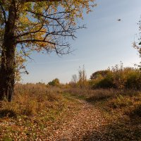Осенний пейзаж :: Александр Синдерёв