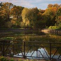 Осенний пруд ... :: Лариса Корж