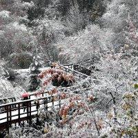 Мокрые хлопья первого снега :: Екатерина Торганская