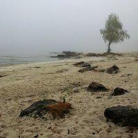 А то, что под нами - песок и туман. :: Volodymyr Shapoval VIS t