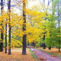 Осень в Ал. парке ЦС :: Сергей