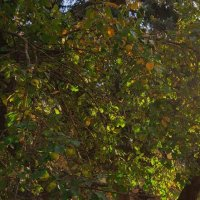 Осень в городе :: Роман Царев