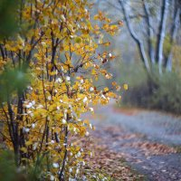 Осени прекрасная пора! :: Павел Сухоребриков
