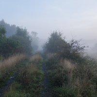 Утренний туман :: Александр Степовой