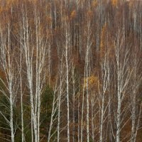 листьев маленький остаток осень желтая кружила :: Евгений Тарасов