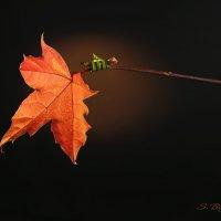 Листья опадают, но электрики не сдаются ! :: Сергей Бойцов
