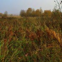 Пожухли травы :: Наталья Лакомова