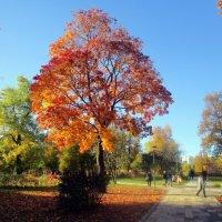 Осень :: Ольга Довженко