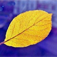 Под солнцем октября. (А у нас во дворе) :: muh5257