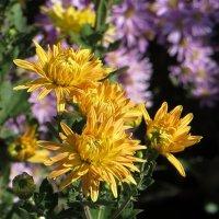 И мне бы так - светло и страстно - любить, как поздние цветы... :: Татьяна Смоляниченко