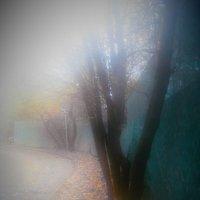 Туман :: Tanja Gerster