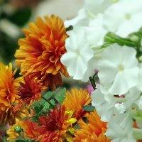 Осенние цветы :: Ольга Елисеева