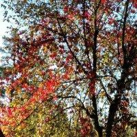 Осень, осень... :: Galina194701
