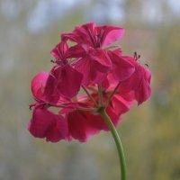 Цветок... :: Владимир Павлов