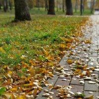 Хотите тишины? Зайдите в осень... :: Ольга Елисеева
