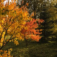 Вспомним осень золотую. :: Марина Никулина