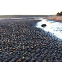 Отлив на Белом море. :: Надежда