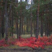Осень на Куршской косе. :: LIDIA V.P.