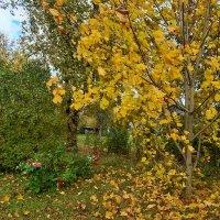 October wind :: silvestras gaiziunas gaiziunas