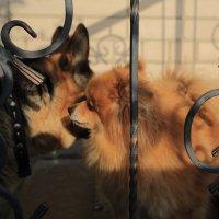 Собачьи секреты. :: Павел