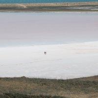 Розовые озера Крыма :: Сергей
