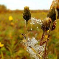 Сверкает яшмой дорогою С небес упавшая прозрачная роса… :: nadyasilyuk Вознюк