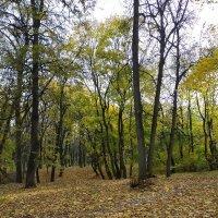 Хотите тишину? Зайдите в осень! :: Yulia Raspopova