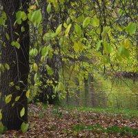 Зелёная осень. :: Ирэна Мазакина