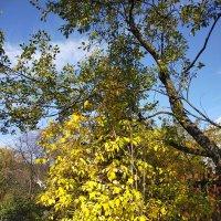 Солнечная осень :: Yulia Raspopova