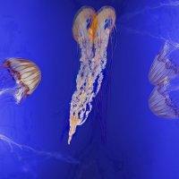 Цветы моря :: irina Schwarzer